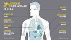 Here's What Every Organ in the Body Would Cost to Transplant Organ Transplant, Bone Marrow, Body Organs, Medical History, Health Magazine, Stay Fit, Healthy Tips, Words Quotes, Life Is Good