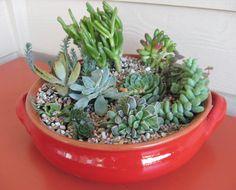 240 Best Dish Gardens Images Miniature Gardens Mini Gardens