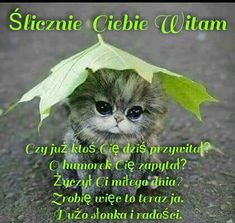 Miłego dnia Good Afternoon, Good Morning, Good Day, Good Night, Animals And Pets, Cute Animals, Gifs, Morning Images, Man Humor
