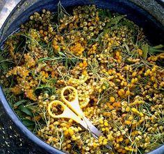 Crochet Stitch, Knitting Yarn, Paella, Bloom, Colours, Ethnic Recipes, Sheep, Prints, Texture