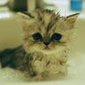 Kitty Cat | Pawshake