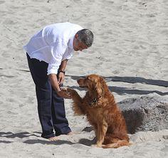 george clooney dog friend (such a cute dog!)