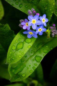 Blumen nach dem Regen