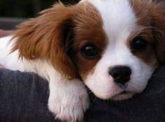 милые щенки - Поиск в Google