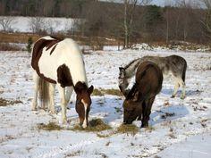 Courtesy: The Dancing Donkey, Binghamton, New York (USA).