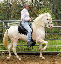 The Costarricense De Paso horses