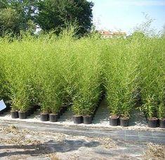 Comment Planter, Terrazzo, Culture, Annie, Inspiration, Decoration, Gardens, Plants, Balconies