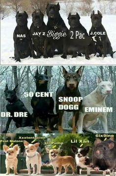 Eminem as a white dog its too good. Funny Animal Memes, Funny Animal Pictures, Funny Images, Funny Photos, Funny Animals, Funny Jokes, Super Funny Memes, Stupid Memes, Stupid Funny
