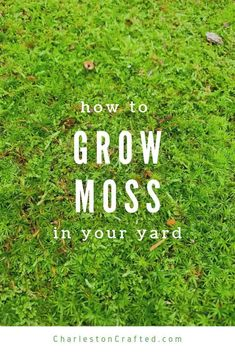 Want to grow moss in your yard? Here are the best tips to have a mossy path or lawn, the all natural (and free!