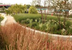 Sarah Price Landscapes » Olympic Gardens Asia
