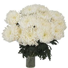 Ivory White Disbud Flowers feature a single bloom of long, lush ivory petals on each stem. This beautiful white flower will add texture and interest to any Love Flowers, Diy Flowers, White Flowers, Wedding Flowers, Flower Centerpieces, Wedding Centerpieces, Flower Arrangements, White Mums, Mini Carnations