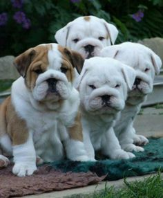 O. My. Word.  For the love of 4 little squishy faces!!!!!!!!