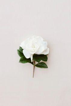 Una flor blanca