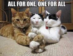 All for one, one for all