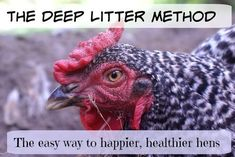 The Deep Litter Method: The easy way to happier, healthier chickens