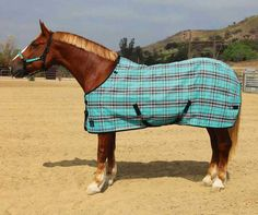 The Kensington Protective Products Signature Textilene Protective Fly Sheet - SureFit provides a superior fit and maximum, year-round protection. Equestrian Boots, Equestrian Outfits, Equestrian Style, Horse Fly, Horse Supplies, Horse Accessories, Show Jumping, Horseback Riding, Day Trips