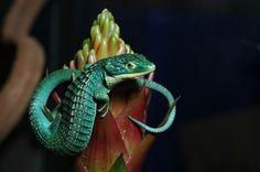 Arboreal Alligator Lizard (Abronia graminea).