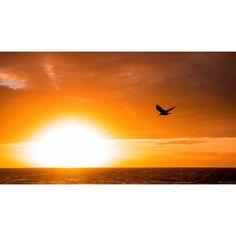'Fly to our Destiny' - by Kaz Godfrey @kaz_rg  #sunset #destiny #extraordinaryisland #ahhbermuda #lovemybermuda #bird #fly #beauty #horizon #future #pinksandbermuda #wearebda #wearebermuda by pinksandbermuda