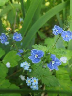 Nurmitädyke. Flower Garden, Wild Flowers, Plants, Cottage Garden, Pansies, Forest Flowers, Unusual Flowers, Flowers, Beautiful Gardens