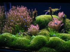 Aquascaping World Competition - Gallery - Kums' Island by Oliver Horvat   - I like this one because of the pink plants, and also this grower doesn't use the chemicals and CO2 normally used to grow these aquascapes - very interesting!  ************************************************ AquascapingWorld - #aquascape - tå√