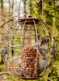Squirrel proof they said, for birds only they said...