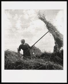 Graanoogst, Drenthe (1937) fotograaf: Malsen, Willem van #Drente