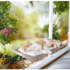 Cama se acopla em janela para o gato aproveitar o sol