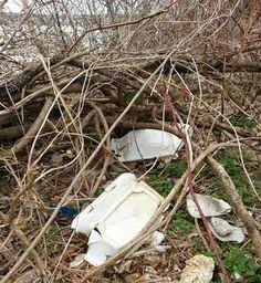 Trash Free Maryland: We passed the foam trifecta!