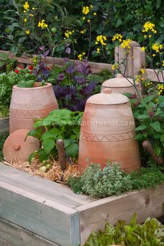 terracotta cloches ~ the removable lids are great