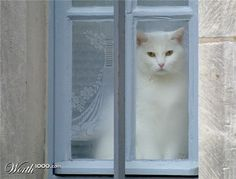 cats sitting by stained glass windows | This lovely cat was sitting in the window which acted as a perfect ...