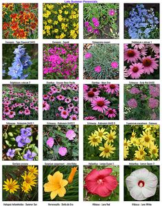 Perennial flowers for a stunning design pinterest perennials perennial flowers for a stunning design pinterest perennials late summer and aster mightylinksfo
