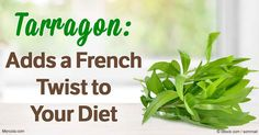 Learn more about this popular herb in the world of cooking. Discover how this herb can benefit your health, and how you can grow it in the comfort of your own home.