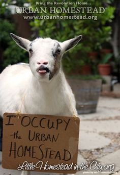 """When you do this you don't need to """"Occupy Wall Street"""" ;)"""