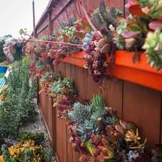 Container Plants, Plant Containers, Succulent Display, Succulents Garden, Fruit, Gardening, Wall, Lawn And Garden, Walls
