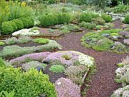 Resource | Thyme Garden Herb Company organically grown herbs, herb seeds, plants, and hops.
