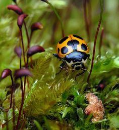 lady bug Russian Photographer Andrew Osokin