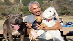 Dog Whisperer with Cesar Millan Full episodes | Season 9 Episode 5 | Jersey Shore Dogs