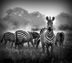 Beautiful Black and White Nature Photography | Inspiration