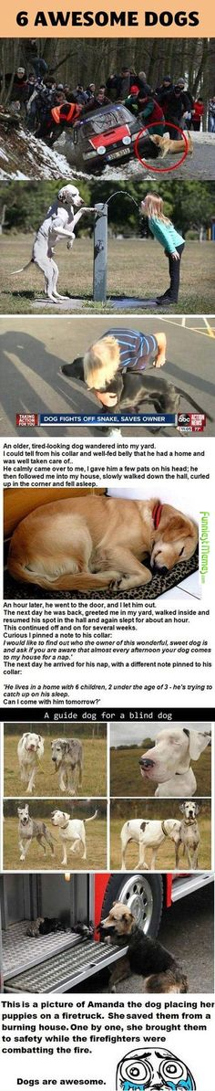 This is why dogs are mans best friend not, men are mans best friend