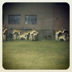 Deers!