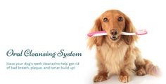 Grooming Services for dog& and cat& Pet Store and Boutique, serving Folsom, Roseville, Granite Bay, Orangevale Dog Teeth, Bad Breath, Cat Grooming, Teeth Cleaning, Pet Store, Your Dog, Pup, Dog Cat, Granite Bay