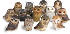Owl Pot Bellys® Boxes