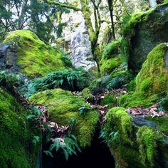 Twilight forest!! Stone Cliff Inn. Oregon City, OR