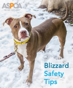 Make sure your pets are ready for the blizzard with these tips! http://www.aspca.org/blog/keep-your-pets-safe-and-happy-during-blizzard