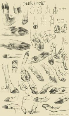 Drawing Animals This is very helpful to me, because it gives me a really good understanding about the shape and movement of deer hooves. Animal Sketches, Animal Drawings, Art Sketches, Art Drawings, Drawing Animals, Anatomy Reference, Art Reference, Deer Drawing, Animal Illustrations