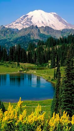 lake, landscape, mountains, trees, fir-trees, summer, purity