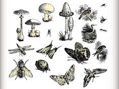 Fauna Flora Set