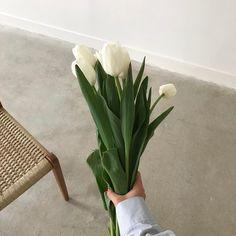 Flowers Aesthetic Korean 68 New Ideas Plant Aesthetic, Korean Aesthetic, Flower Aesthetic, White Aesthetic, Aesthetic Pastel, My Flower, Cactus Flower, Planting Flowers, Flowers Garden