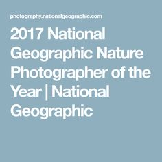 2017 National Geographic Nature Photographer of the Year | National Geographic