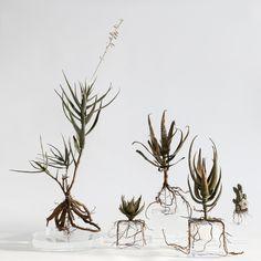 Bronze botanical specimen from Cape Town's Table Mountain by artist, surfer dude and botanist Nic Bladen. From HAND/EYE's Air Plants, Indoor Plants, Sculpture Art, Sculptures, Smell Of Rain, Cactus, Botanical Decor, Art Corner, Plant Art